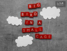 Patrick Watson big bird